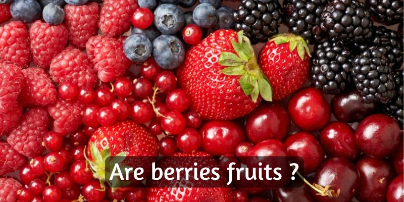 Read more about the article Are Berries Fruits ? – Here's The Truth (With Explanatory Pictures)