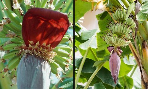 fruits berries (2)