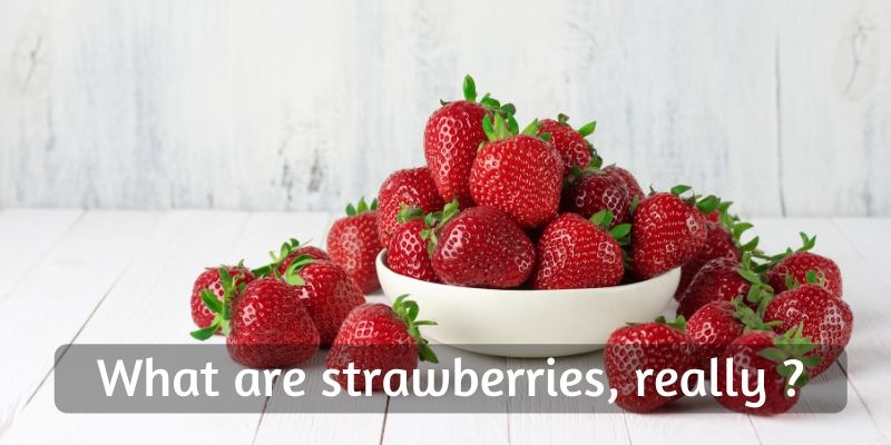 Read more about the article Is Strawberry A Vegetable Or Fruit ? – The Truth About Your Favorite Berry