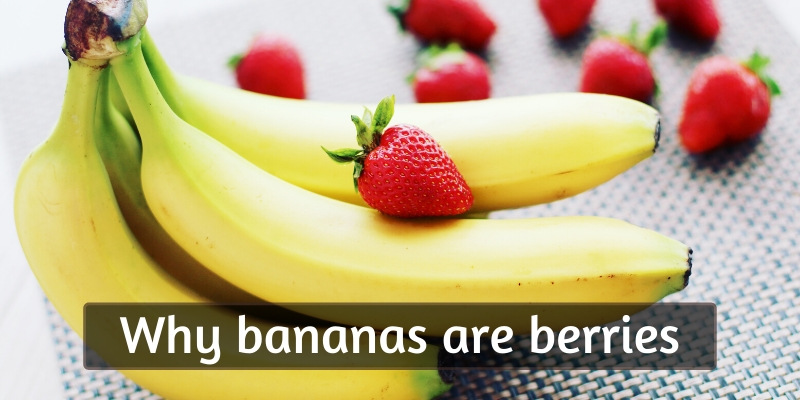 Read more about the article This Just In: Bananas Are Berries, But Strawberries Aren't (Here's Why)