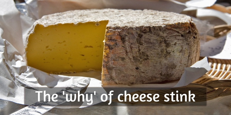 cheese smell