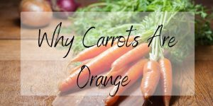 Read more about the article Here's Why Carrots Are Orange (It's Not Just Politics)