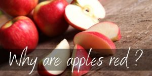 Read more about the article We Found Out Why Apples Are Red, So You Don't Have To
