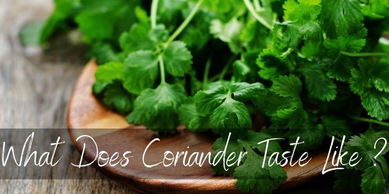 coriander taste