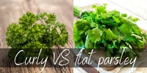 Curly VS Flat Parsley – How To Choose, And Which Is Better ?