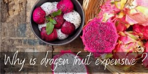Read more about the article 4 Reasons Dragon Fruit Is So Expensive