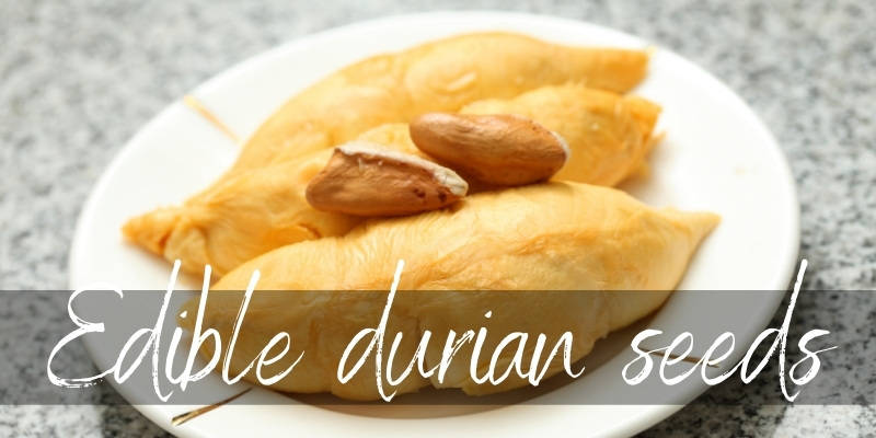 Read more about the article Are Durian Seeds Edible ? Read This Before Buying Durian