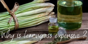 Here's Why Lemongrass Is So Expensive