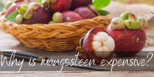 Why Is Mangosteen So Expensive ? Here's What To Know