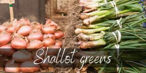 Read more about the article Are Shallot Greens Edible ? Here's What We Found Out