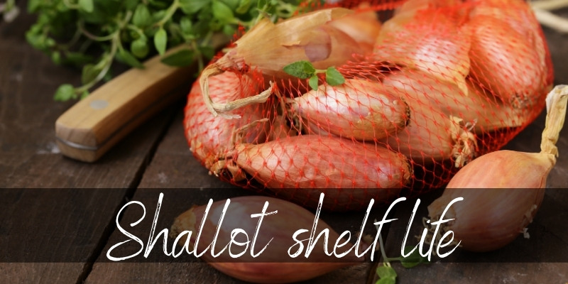 shallot last (1)