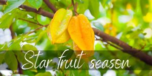 Read more about the article When Is Star Fruit In Season ? Here's What You Should Know