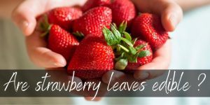 Can You Eat Strawberry Leaves ? Here's What you should know