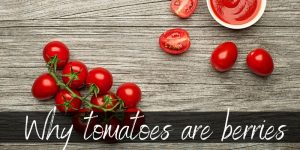 Read more about the article The Real Reason Tomatoes Are Berries