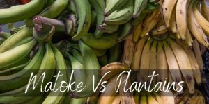Read more about the article Matoke Vs Plantains – Here's How Different They are