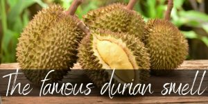 Read more about the article What Does Durian Smell Like ? Here's What We Found Out