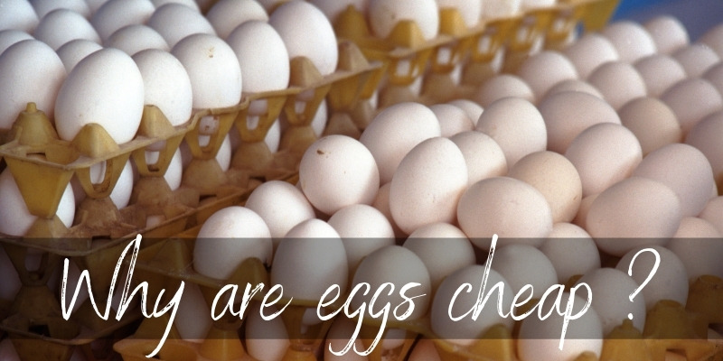 Why Are Eggs So Cheap ? Here's What We Know