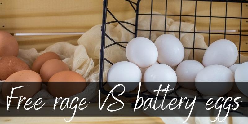 free range battery eggs
