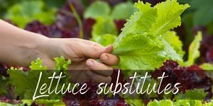 Read more about the article Best Lettuce Substitutes – 12 Ideas To Try Next