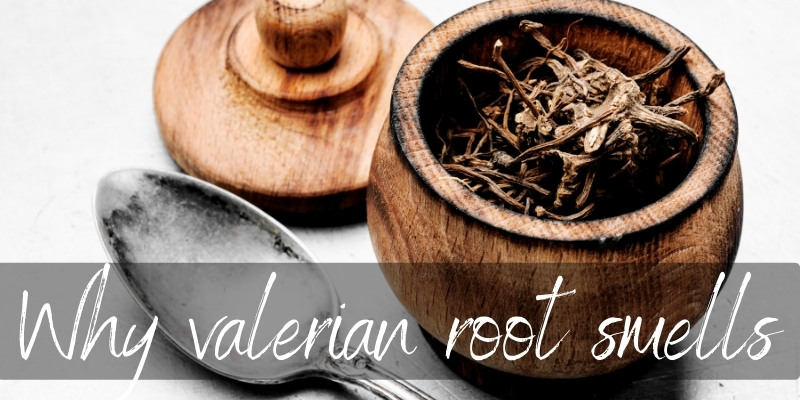 Why Does Valerian Root Stink ? Here's What We Found Out