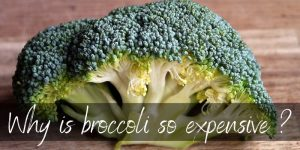 Read more about the article Why Is Broccoli So Expensive ? Here's 4 Big Reasons