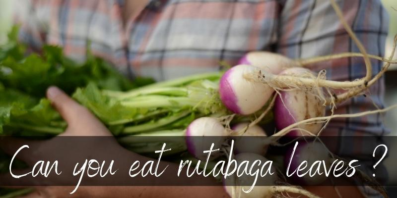 eat rutabaga leaves