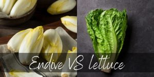 Read more about the article Endive VS Lettuce – 4 Differences To Pick Between Them