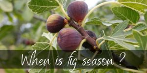 When Are Figs In Season ? Here's What To Know