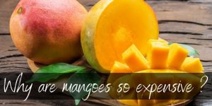 Read more about the article Why Are Mangoes So Expensive ? Here's The Top 3 Reasons