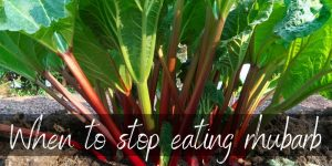 When Not To Eat Rhubarb – Here's What To Know