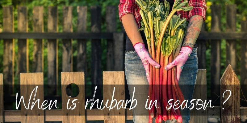 rhubarb season