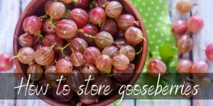 Read more about the article How To Store Gooseberries So They Last Longer