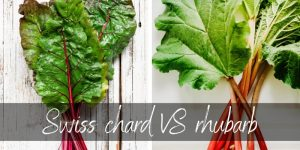 Read more about the article Swiss Chard VS Rhubarb – Differences & How To Tell Them Apart