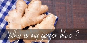 Why Is My Ginger Blue ? Here's What We Know