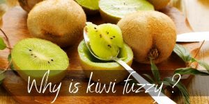 Read more about the article Why Are Kiwis Fuzzy ? And Is There A Hairless Kiwi ?