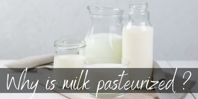 Read more about the article Why Is Milk Pasteurized ? A Little About The Safest Milk