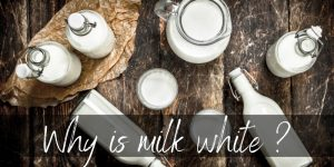 Why Is Milk White ? Light Plays A Big Part