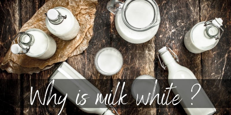 Read more about the article Why Is Milk White ? Light Plays A Big Part
