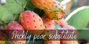 Read more about the article Prickly Pear Substitute – 4 Refreshing Ideas
