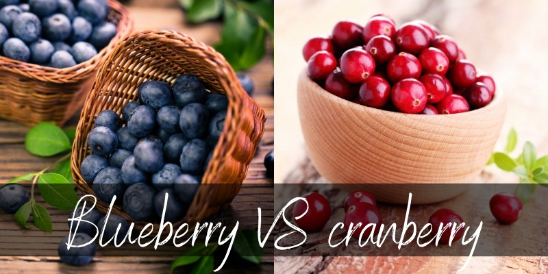 Read more about the article Cranberry VS Blueberry – Main Differences And How To Use Them