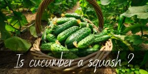 Is Cucumber A Squash ? No, But They're Related
