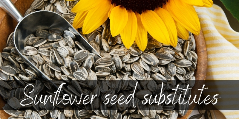 Read more about the article Sunflower Seed Substitute – 7 Crunchy & Nutty Ideas To Try