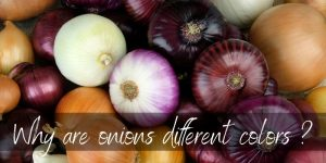 Read more about the article Why Are Onions Different Colors ? Here's What's Happening