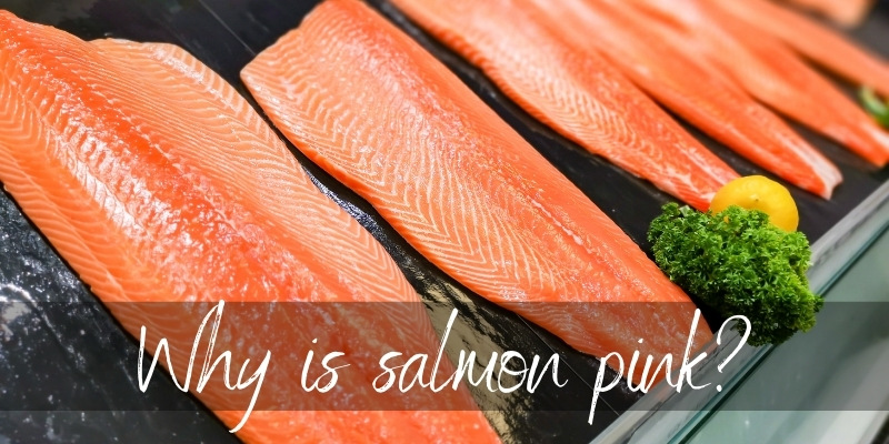 Read more about the article Why Is Salmon Pink ? Here's How It Gets Its Color