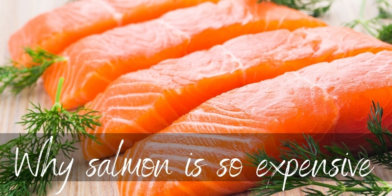 Read more about the article Why Is Salmon So Expensive ? 7 Solid Reasons You're Paying Extra