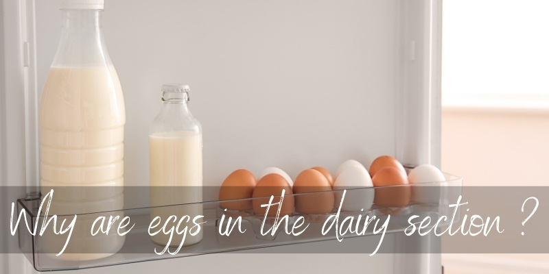 Why Are Eggs In The Dairy Section ? Here's 4 Good Reasons