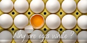 Why Are Eggs White ? Here's What Determines Their color