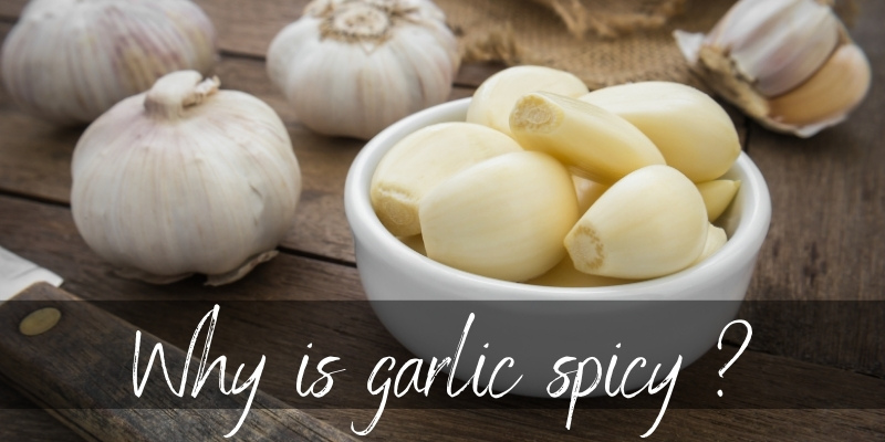 Read more about the article Why Is Garlic Spicy ? Here's Why, And How To Tone It Down