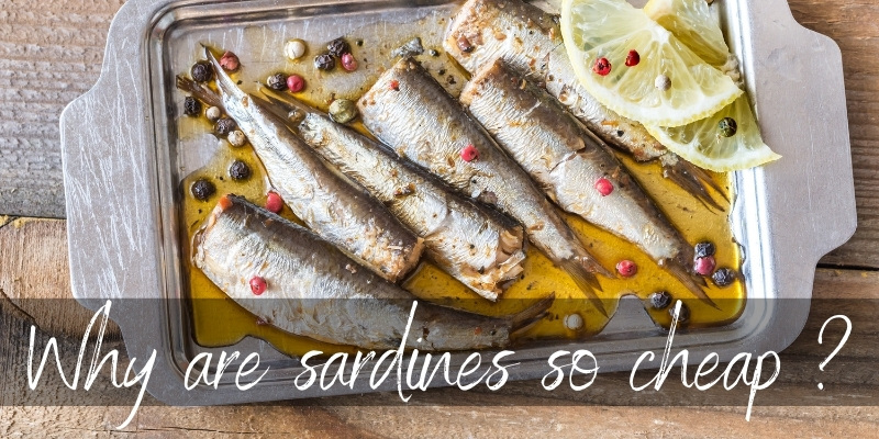 Read more about the article Why Are Sardines So Cheap ? 3 Great Reasons