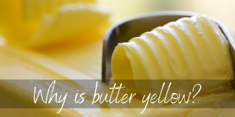 Read more about the article Why Is Butter Yellow ? Here's What's In It